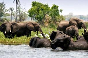 elephants-in-liwonde-national-park-malawi