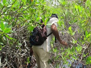 in-the-mangroves-honduras